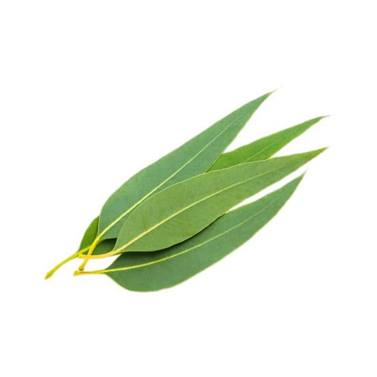 eucalyptus-e-liquid